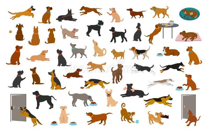 Olika hundavel och den blandade uppsättningen, husdjur spelar rinnande banhoppning som äter att sova, sitter lägger ner och går,  royaltyfri illustrationer