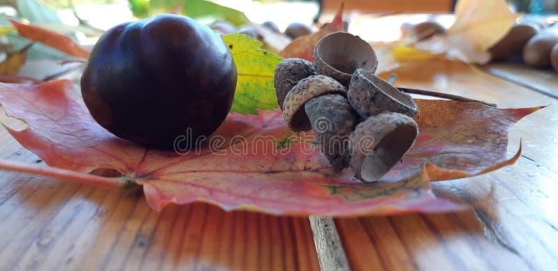Olika kastanjer och ekollonar på träbakgrund royaltyfri fotografi