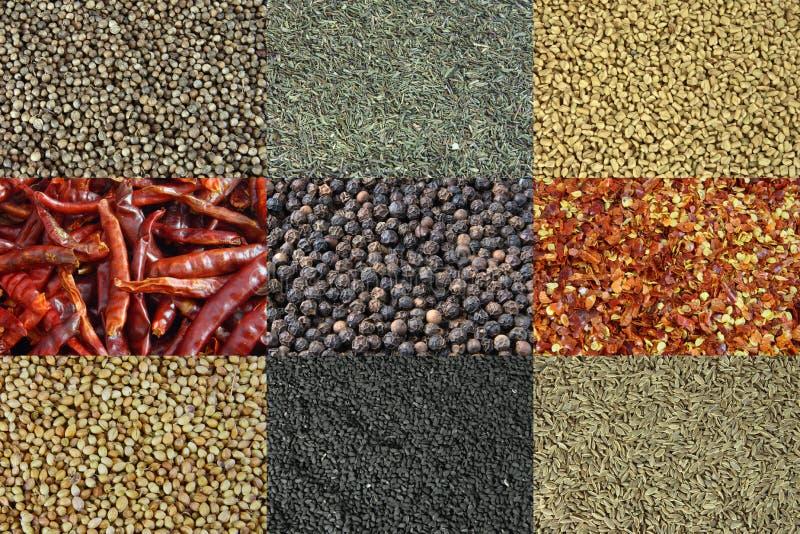 olika kryddor för bakgrund arkivbild