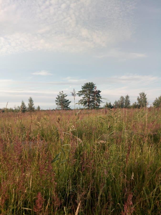 Olika moln över ett fält med träd arkivfoton