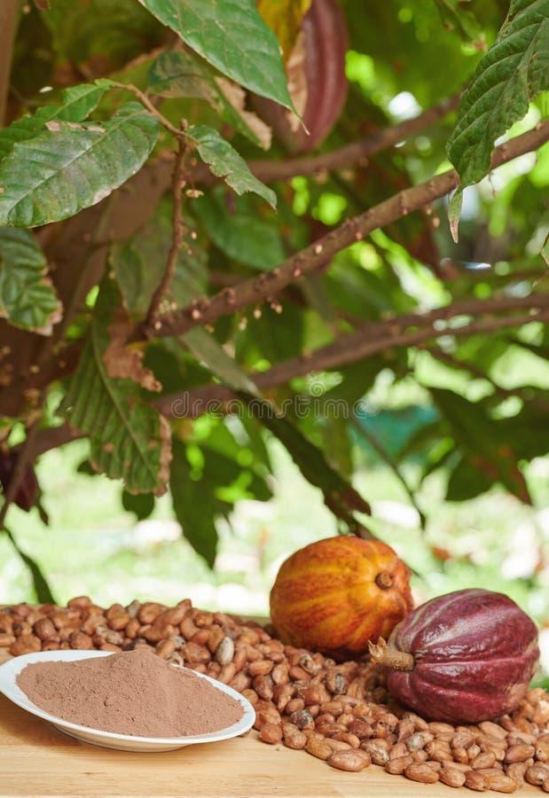 Olika produkter för kakao arkivfoton