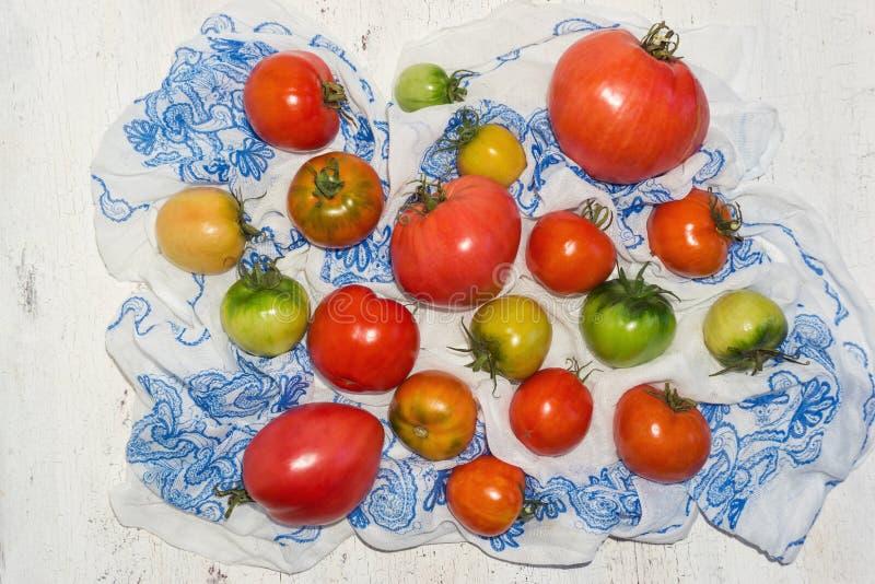 Olika röda, gula och gröna lantgårdtomater royaltyfri foto