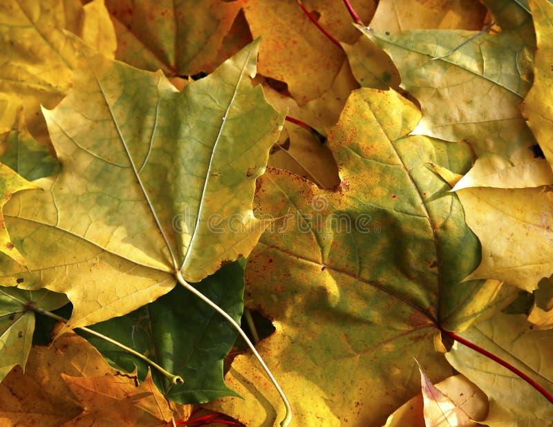 Download Olika Sikter Av Höstlandskap Arkivfoto - Bild av lantligt, lampa: 78732280
