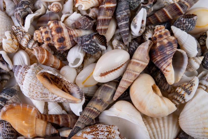Olika snigelskal h?llde p? tabellen F?rgrika skal av molluskar arkivfoto