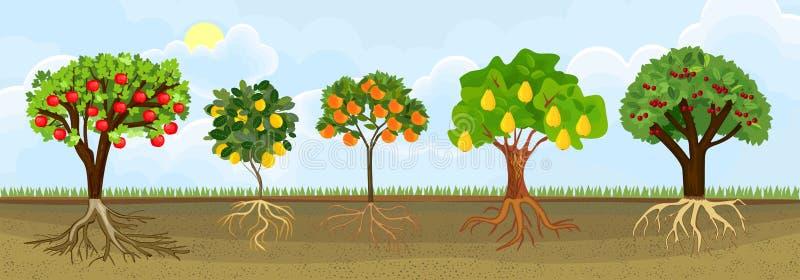 Olika tecknad filmfruktträd med mogna frukter och den gröna kronan i trädgård Växtuppvisning rotar strukturen den underjordiska n royaltyfri illustrationer