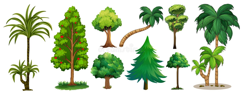 olika treestyper stock illustrationer