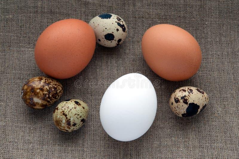 Olika typer av ägg på hessianslinnetyg royaltyfri bild