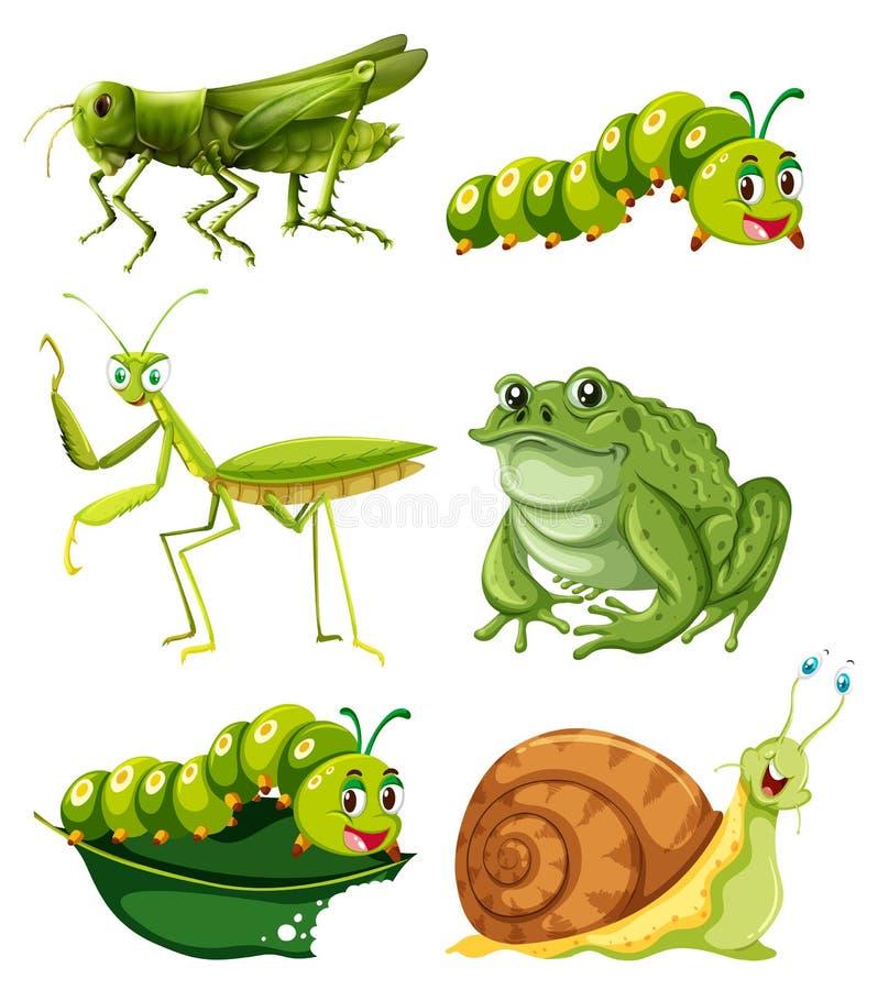 Olika typer av kryp i grön färg vektor illustrationer