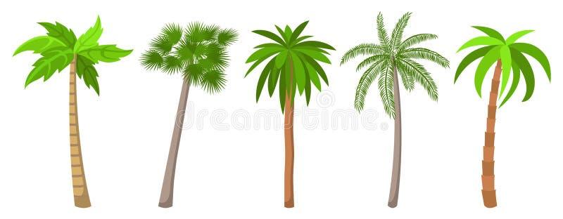 Olika typer av palmträduppsättningen vektor illustrationer