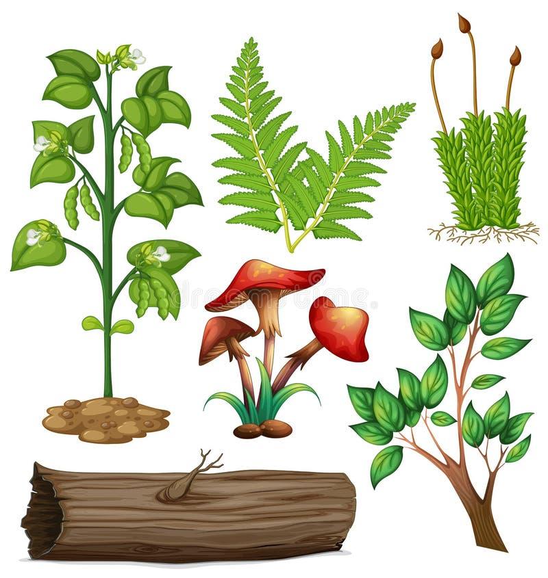 Olika typer av växter vektor illustrationer
