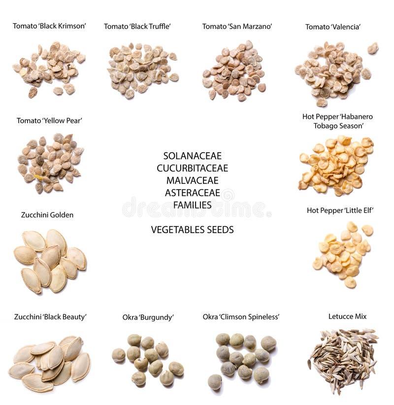 Olika variationer för grönsakfrö arkivfoto