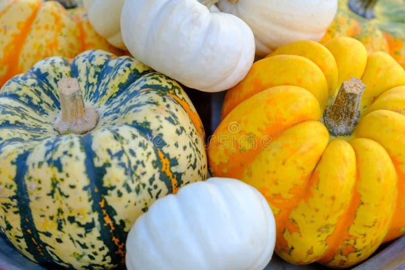 Olikt av dekorativa färgrika pumpor efter höstskörd på bondemarknad fotografering för bildbyråer