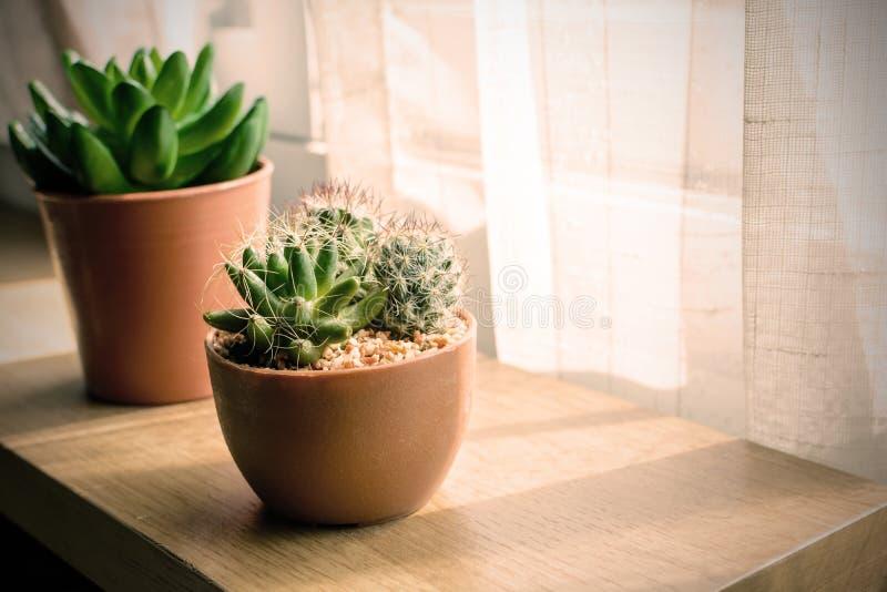 Olikt av den lilla växten och kaktuns i en kruka arkivbilder
