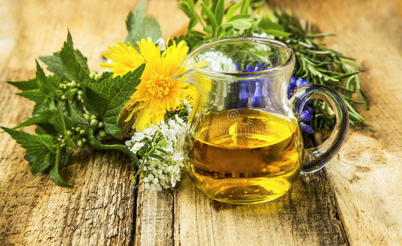 Olio di erbe organico con le piante, dente di leone, menta, ortica, rosemar fotografie stock libere da diritti