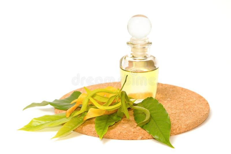 Olio di massaggio dell'aroma di ylang ylang immagine stock