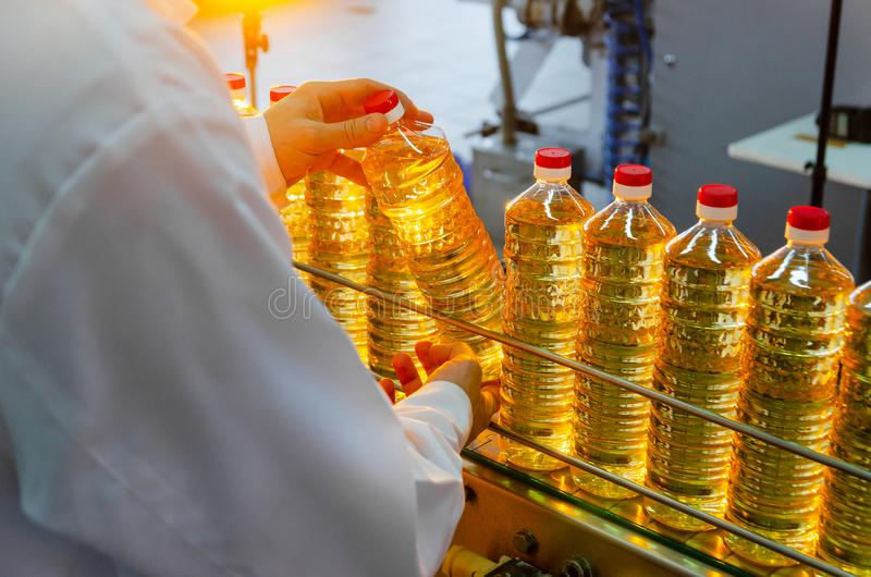 Olio di Unflower Olio di oliva L'impiegato della fabbrica nelle camice tiene una bottiglia di olio in sue mani su un nastro trasp fotografia stock