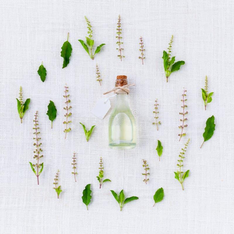 Olio essenziale con la foglia ed il fiore santi del basilico fotografia stock