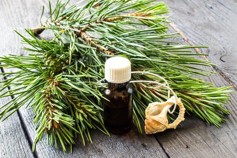 Olio essenziale del pino e rami del pino con i coni verdi immagini stock libere da diritti