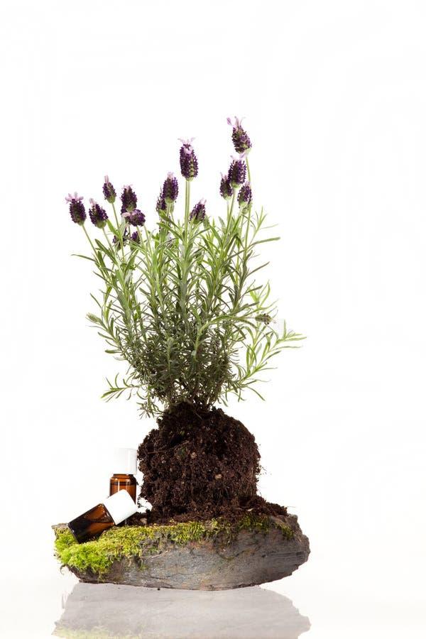 Olio essenziale delle erbe fotografia stock
