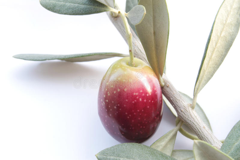 Download Olive branch stock photo. Image of plant, antioxidant - 22038322