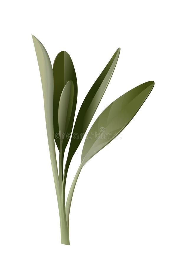 Olive Branch lizenzfreie abbildung