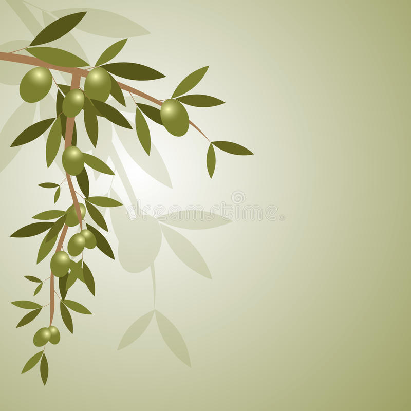 Olive branch background. Illustration of background with green olive branch.EPS file available