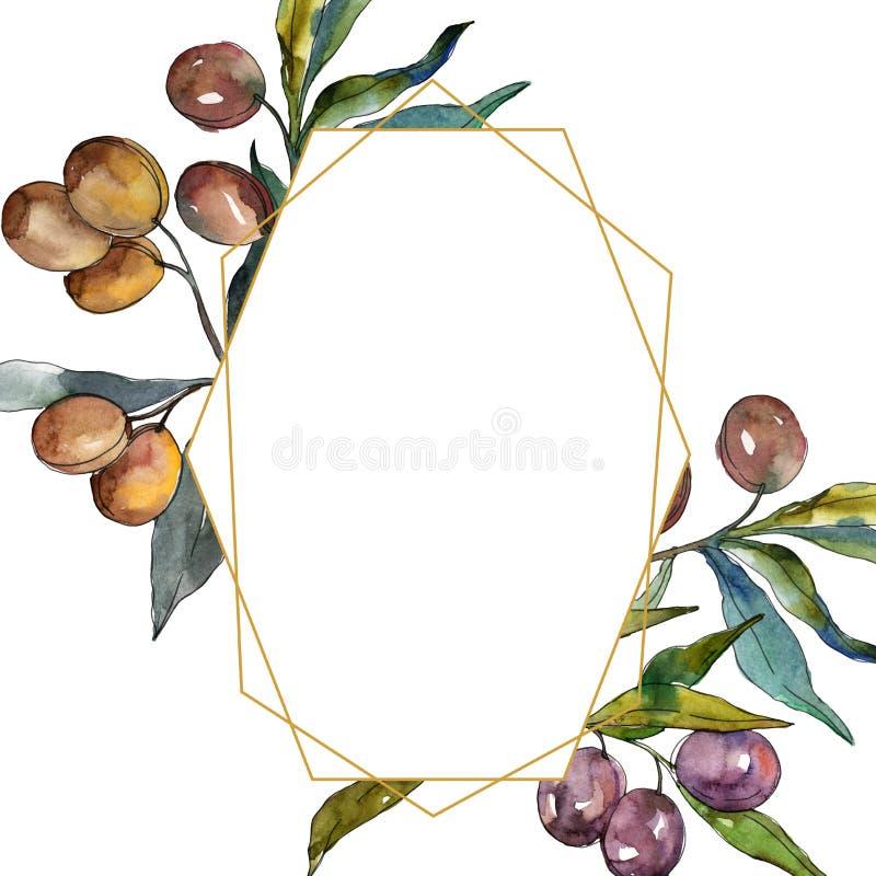 Olive branch with black and green fruit. Watercolor background illustration set. Frame border ornament square. stock illustration