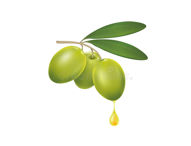 Olive branch with a drop of olive oil stock illustration