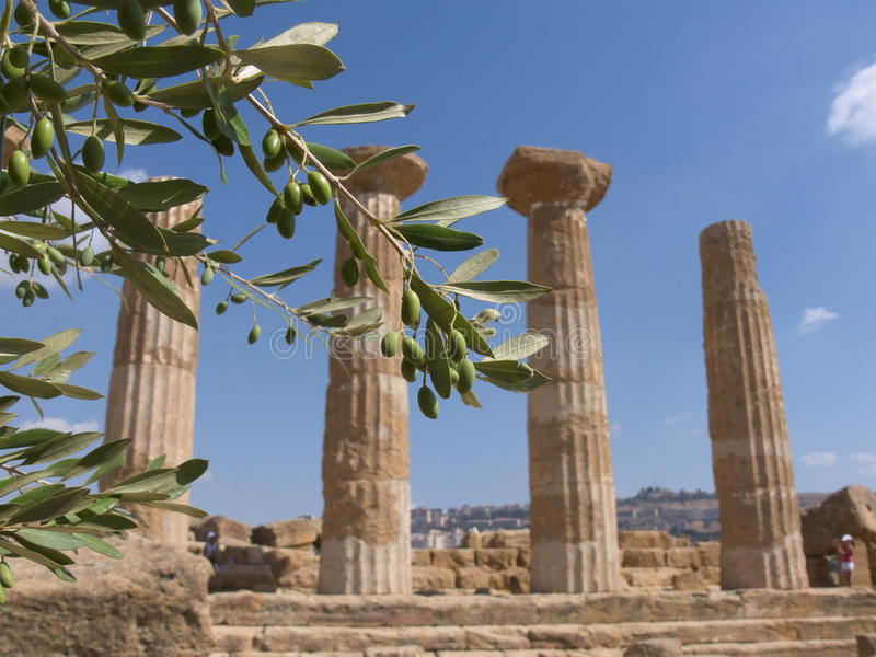 Olive Branch And Greek Column royalty free stock image