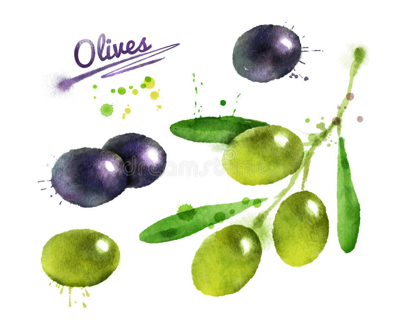 Olive branch with paint splashes. stock illustration