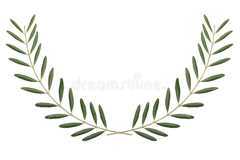 Olive branch, peace symbol on white background stock photography
