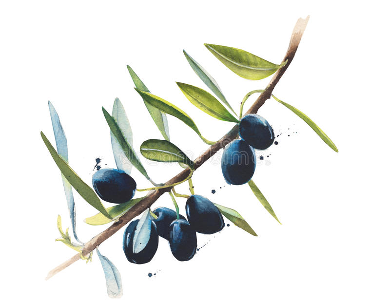 Olive branch watercolor illustration isolated on white background royalty free illustration