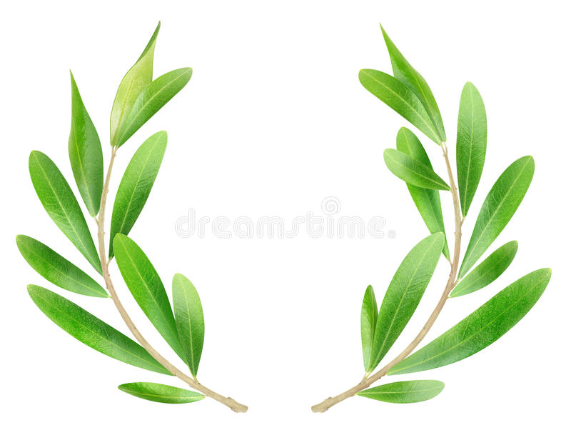 Olive branches stock photography