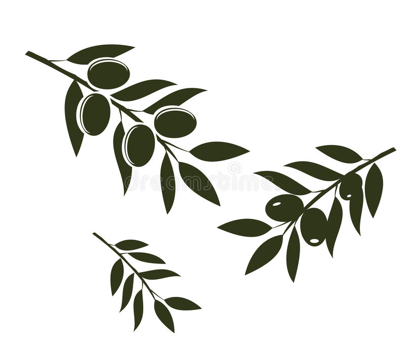 Olive Branches Vector illustration libre de droits