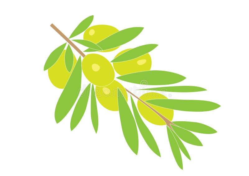 Download Olive brunch stock illustration. Image of harvest, green - 11571543