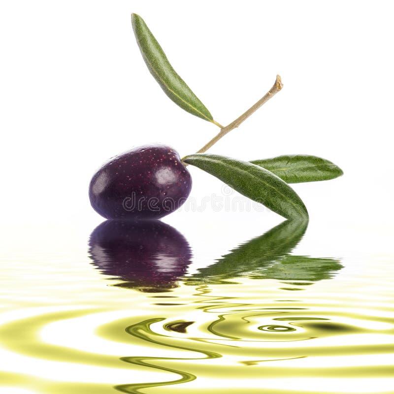 Olive crue de la meilleure qualité sur un fond blanc image stock