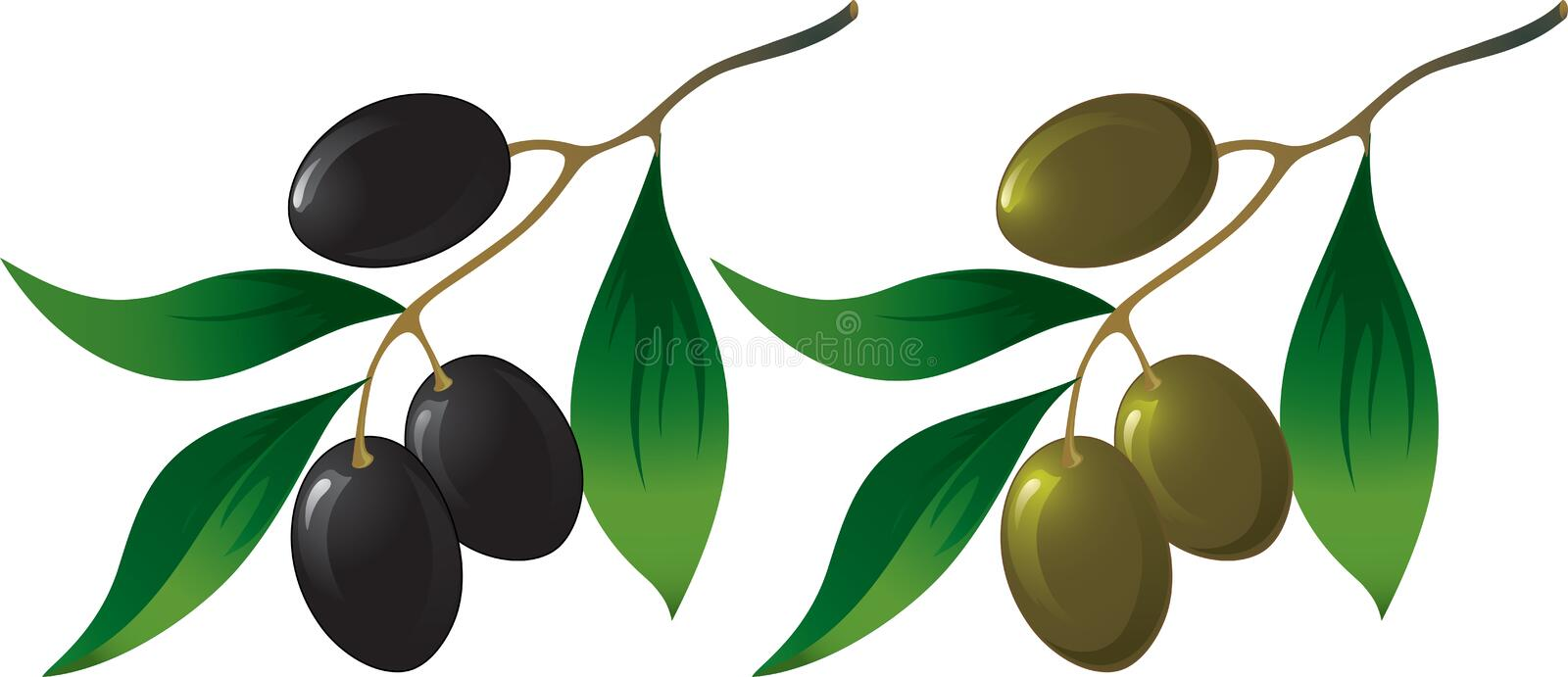 olive de branchement illustration de vecteur