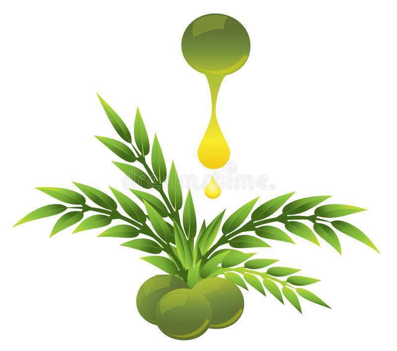 Download Olive with a drop stock illustration. Image of ingredient - 15949985