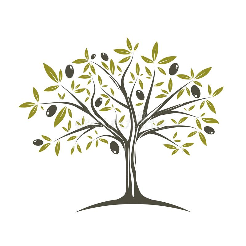 olive enkel tree fotografering för bildbyråer