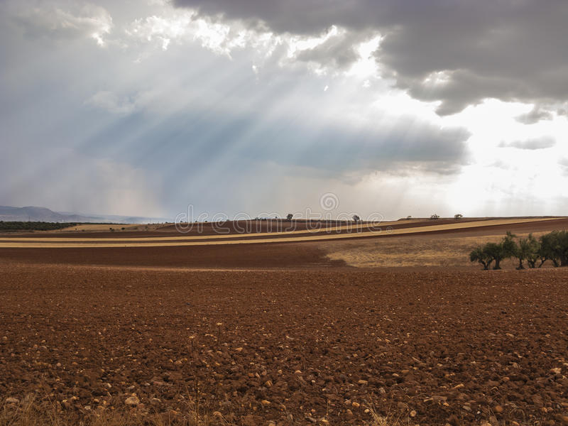 Olive field, Greeny landscape agaisnt blue sky and sun, spanish royalty free stock photo