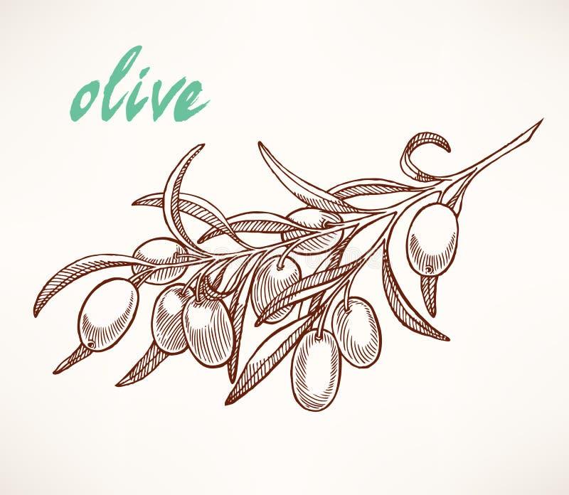 Olive fresche illustrazione di stock