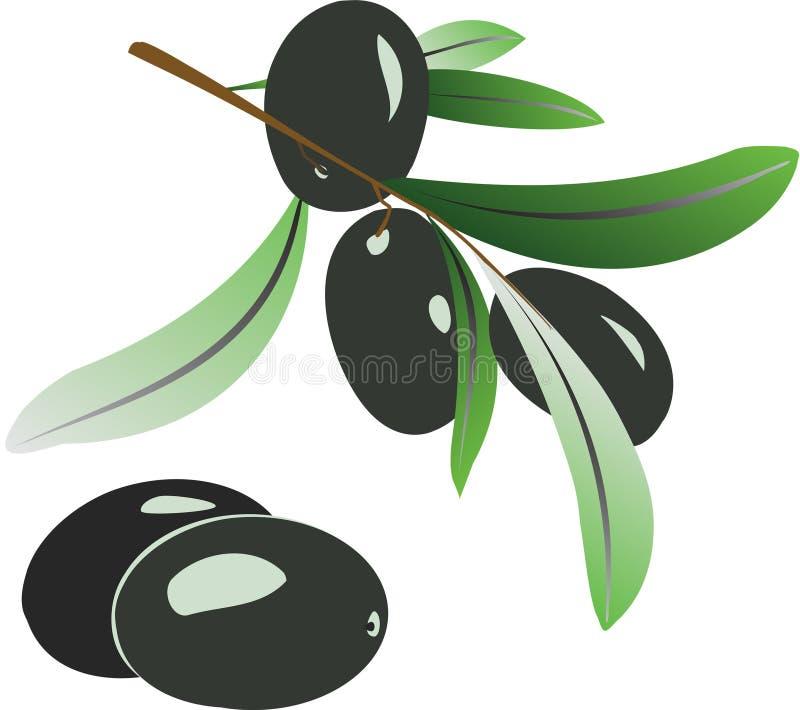 olive gałęziasta ilustracja wektor