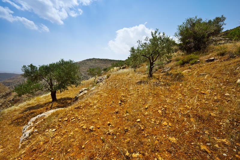 Download Olive Grove stock photo. Image of canyon, farming, erosion - 22880126
