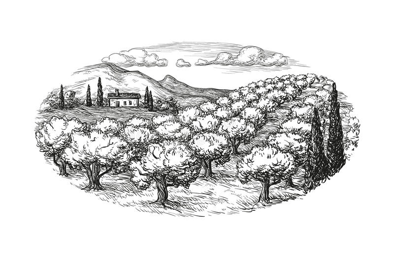 Olive grove landscape. Hand drawn olive grove landscape. Isolated on white background. Vintage style vector illustration stock illustration