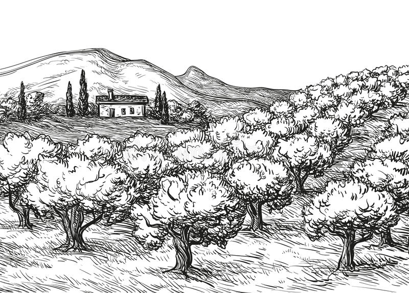 Olive grove landscape. Hand drawn olive grove landscape. Vintage style vector illustration vector illustration