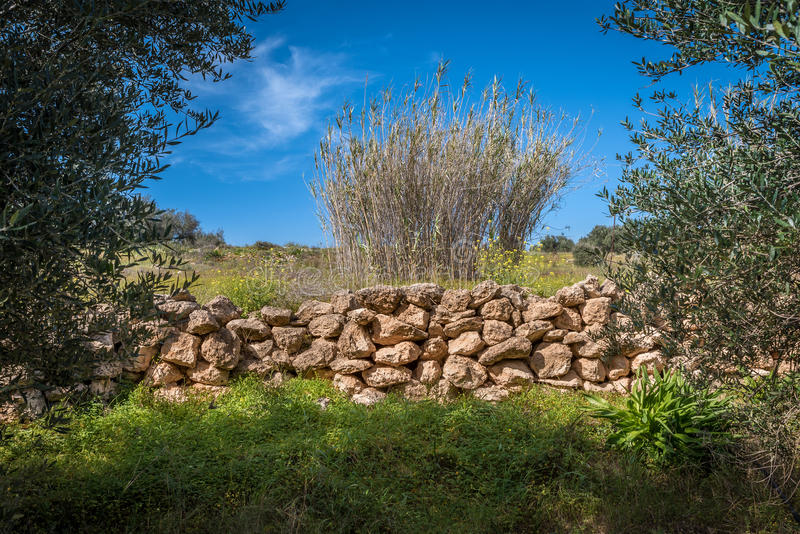 An olive grove near a water stream. An olive grove stone fence is many times used to set the boundaries of the grove. These stones most of the times originate stock photography