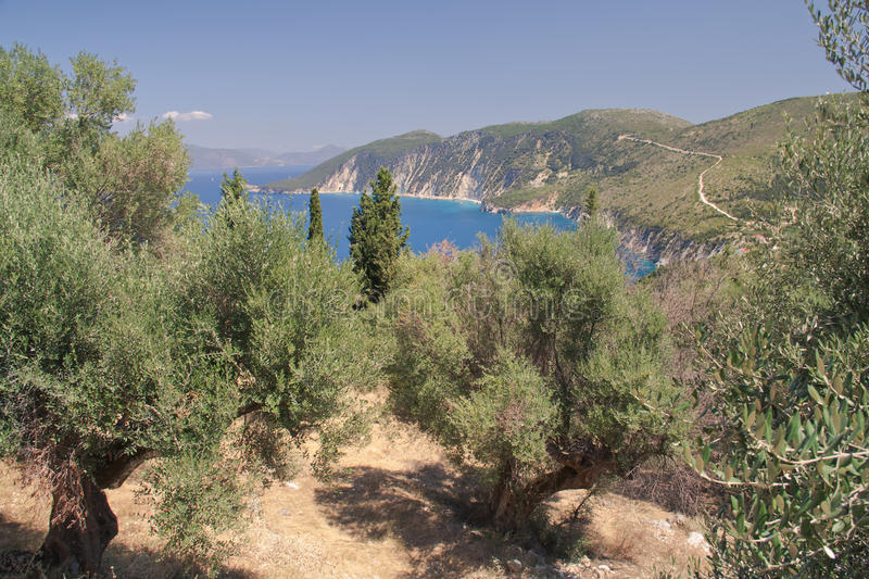 Olive grove. Northern Ithaca, Greece stock image