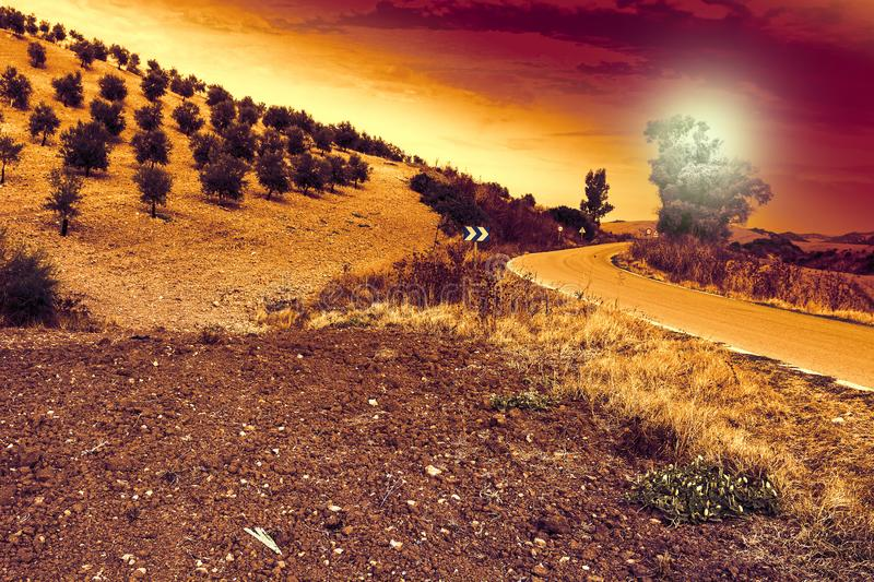 Mysterious olive grove in Spain. Olive grove in Spain at sunrise. Breathtaking landscape and nature of the Iberian Peninsula royalty free stock photo