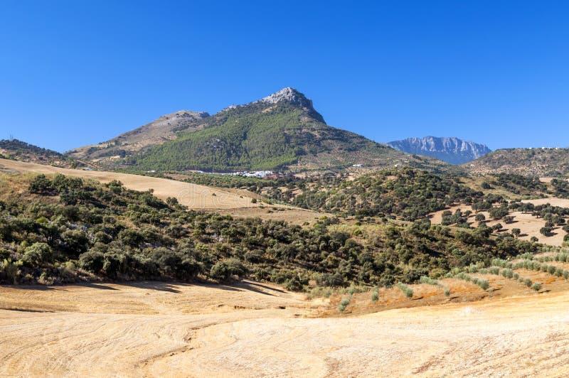 Olive Grovein The Mountains Stock Photo