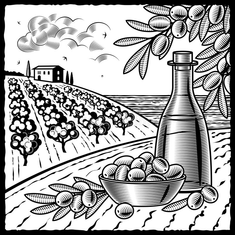 Download Olive Harvest Black And White Stock Vector - Image: 18314549